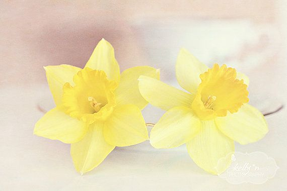 Buttercream Daffs Daffodil Flowers Still Life by kellynphotography, $28.00