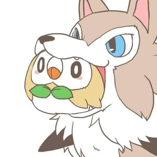 rowlet y lycanroc (I put in what comes after this, and Google translate) Parece que Lycanroc va a tragar a Rowlet  (Translation from Google translate) It seems that Lycanroc is going to swallow Rowlet