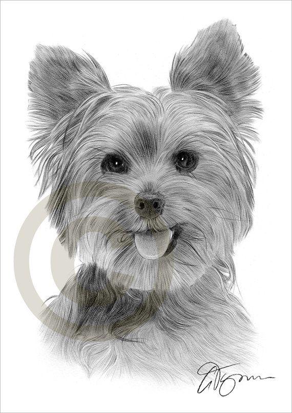 Yorkshire Terrier Bleistift Zeichnung Druck Grafik Signiert