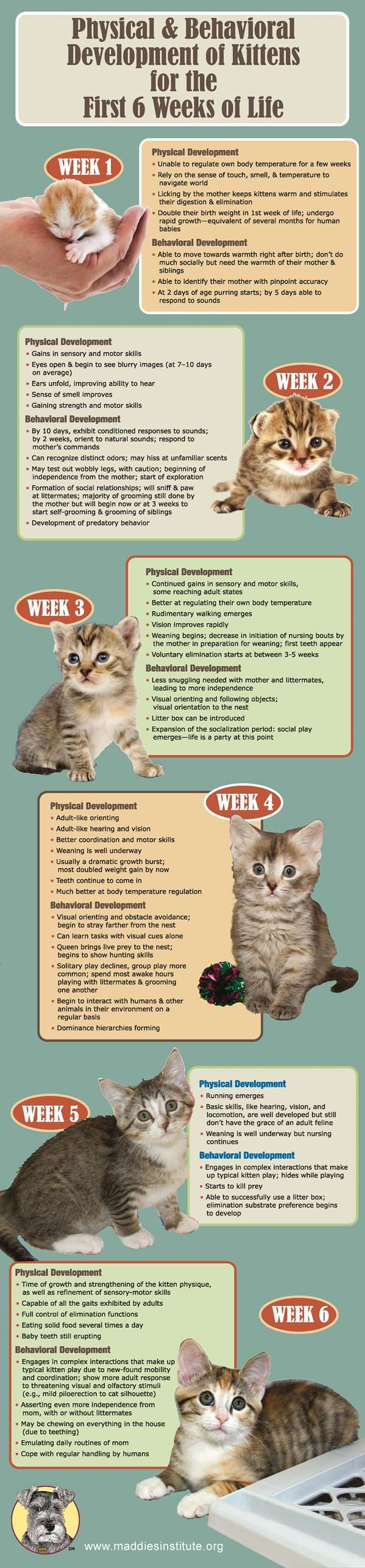 Physical and Behavioral Development of Kittens