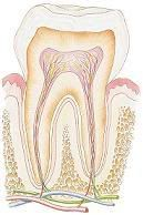 Having some tooth decay creeping in on you? Here's a great article on what causes it. It may surprise you.