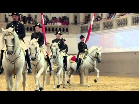 Horse video - Spanische Hofreitschule | Bundesgestüt Piber |Federal Stud Piber
