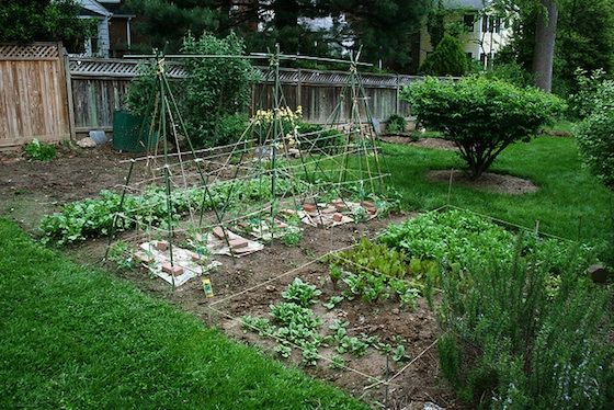 How To: Plant a Vegetable Garden