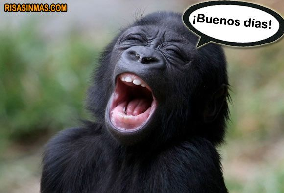 9 Best Images About Animalitos Bonitos 3 On Pinterest