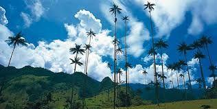 Resultado de imagen para valle del cocora colombia