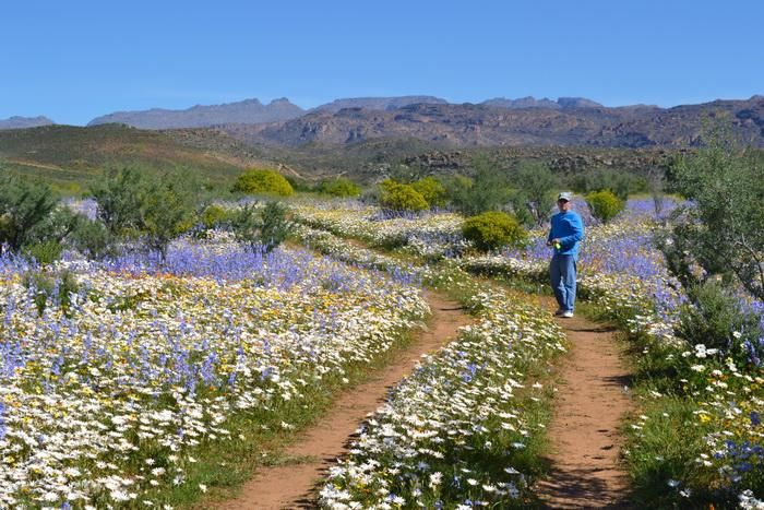 Spring flowers, Biedouw Valley, South Africa