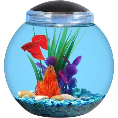25 best ideas about 1 gallon fish tank on pinterest 20 for How much are fish at walmart