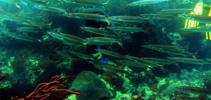 Las Galeras Divers: Dive center and scuba diving school in Las Galeras, Samana, Dominican Republic