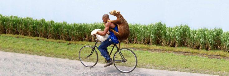 WOWCuba, Turismo en Cuba, Hospedaje, Alquiler de autos y bicicletas