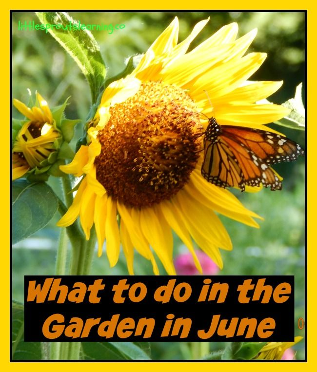 The June garden is rockin! Check out the chores for June.