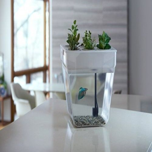 Description indoor water garden table top fish tank kitchen living room office decor relax indoor water gardenbring the garden inside with a self-cleaning indoor water garden fish tank that grows food! The water garden (formerly the aqua farm) creates a closed-loop ecosystem—the fish feed the plants and plants clean the water.includes all this and more!this 3-gallon fish tank indoor water garden is a closed-loop, self-cleaning ecosystem. Using the science of aquaponics, the fish waste…