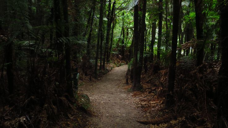 Beautiful fern forest on the Abel Tasman track