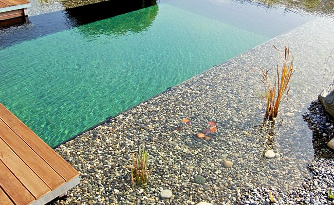 Schwimmteiche von sepp gala bau naturpool und for Schwimmteich natur