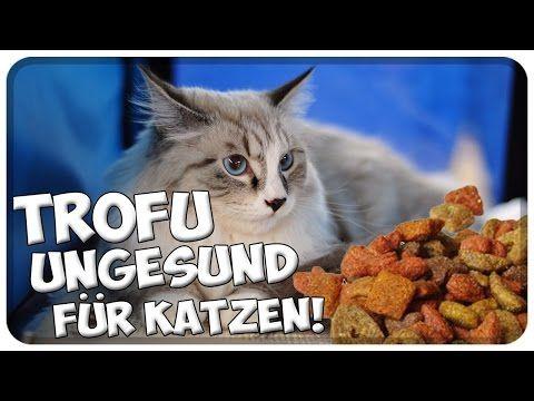 Youtube Katzen Katzen Infos Und Futter