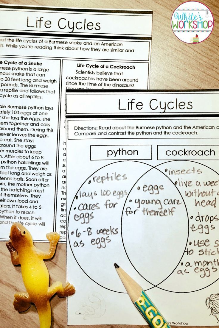 Life Cycle Science Texts Graphic Organizers And Questions For 3rd 4th And 5th Graders Life Cycles Science Teaching Resources Life Cycles Activities