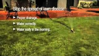 Top 10 Summer Lawn Care Tips | watering | mowing| lawn clippings | fertilizing | weeds | grubs |  Bayer Advanced