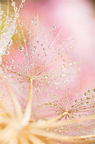 Raindrops ( Debra Wiseberg/Getty Images)