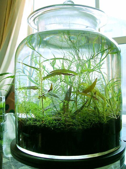 1000 Images About Terrarium Amp Bottle Aquarium On Pinterest