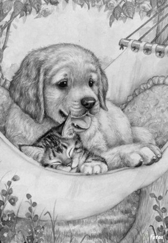 Free Coloring Pages Of Dogs And Cats : 355 best coloring images on pinterest