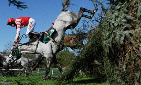Grand National betting boycott urged by animal charity    Campaigners appeal for gamblers to send money they might have wagered to a horse sanctuary instead