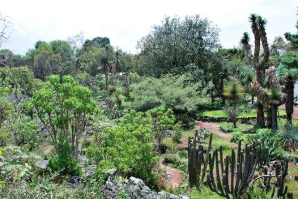 jardin botanico unam