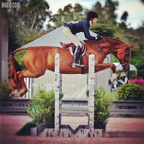 Awesome equitation but what an awful long back:/