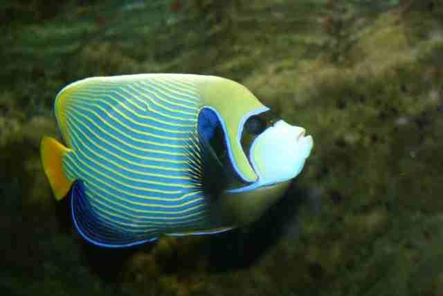 Re: Foto's van zeewater vissen