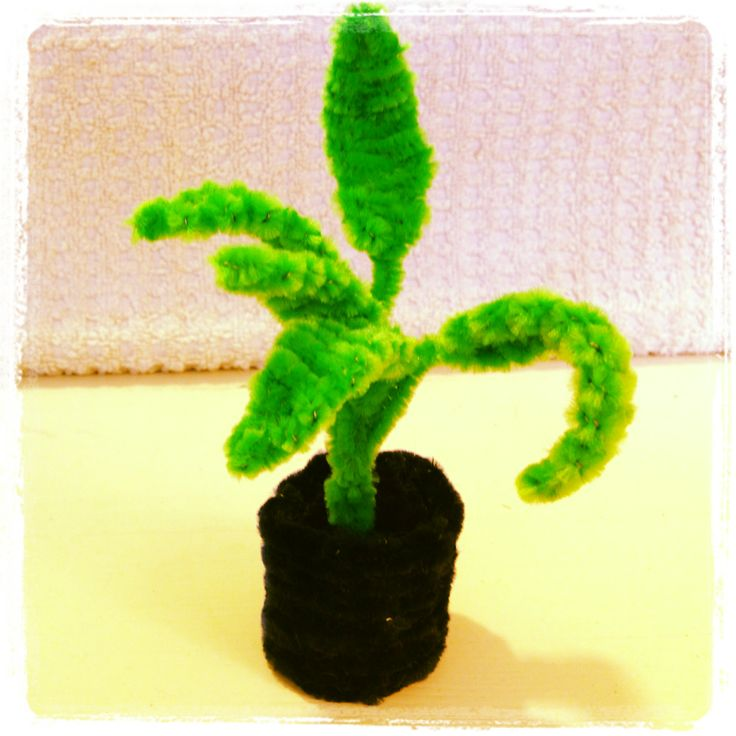Pipe cleaner plant