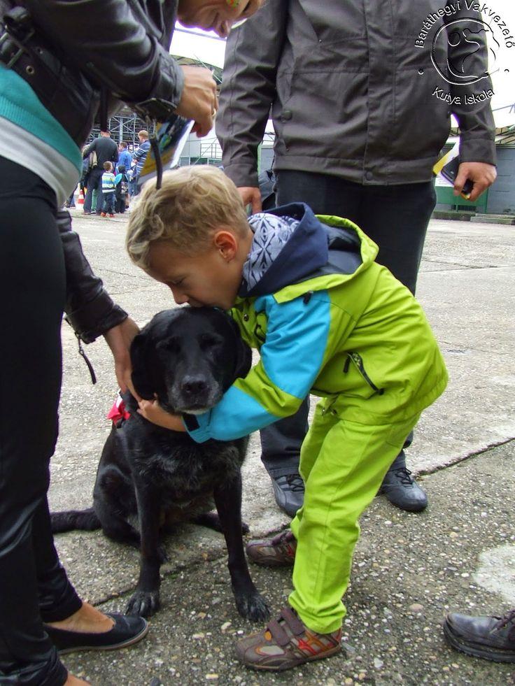 A vakvezető kutya barátságos és nagyon cuki :)