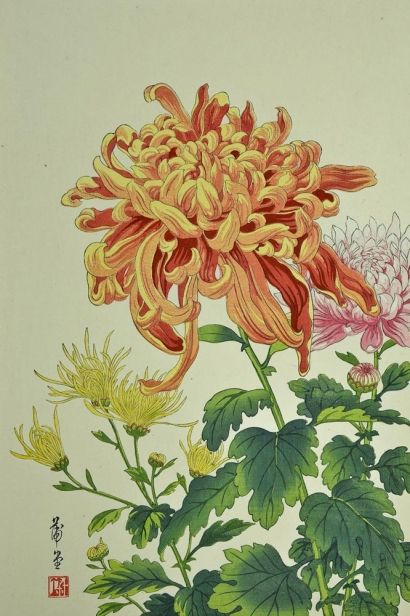 Chrysanthemum, c. 1930s | Nishimura Hodo  | Woodcut on paper | Yellow mums, white mums--  as for me, I crave a red  chrysanthemum too!--Shiki (1867-1902)