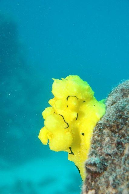 colourful sea slug great barrier reef cairns australia