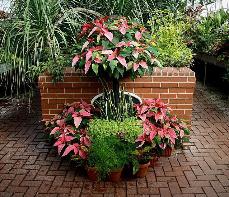 Christmas Tree Garden Ridge: 77 Best Christmas At Biltmore Images On Pinterest