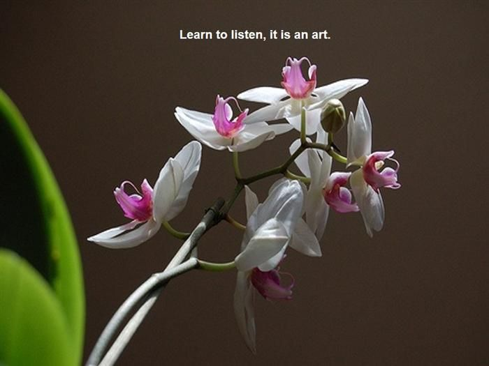 Life lessons with flowers