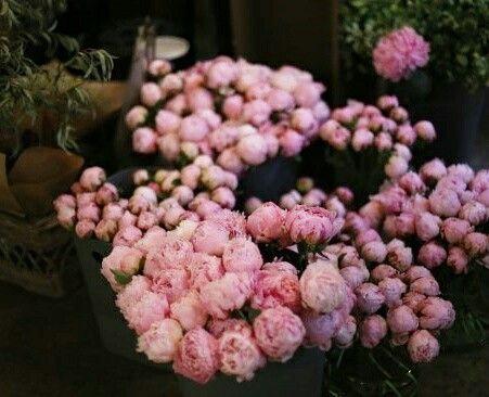 Peony , flowerlesson ,flowerschool ,flowers ,florist ,flowerschool ,flowerclass ,lejardinflower