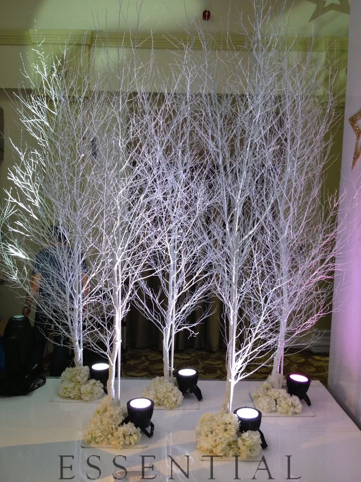 10ft White birch trees can help create your own amazing Narnia - www.essentialweddinghire.com