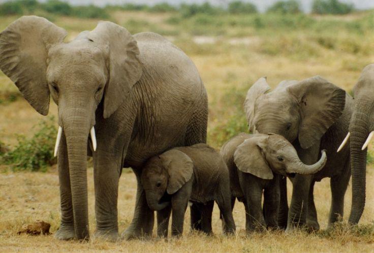 Animal Sanctuaries in Tripura, India @ Sanctuariesindia.com