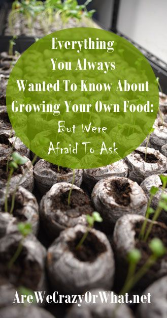 The nitty-gritty about growing your own food organically. I address things you won't find in a gardening book. #beselfreliant