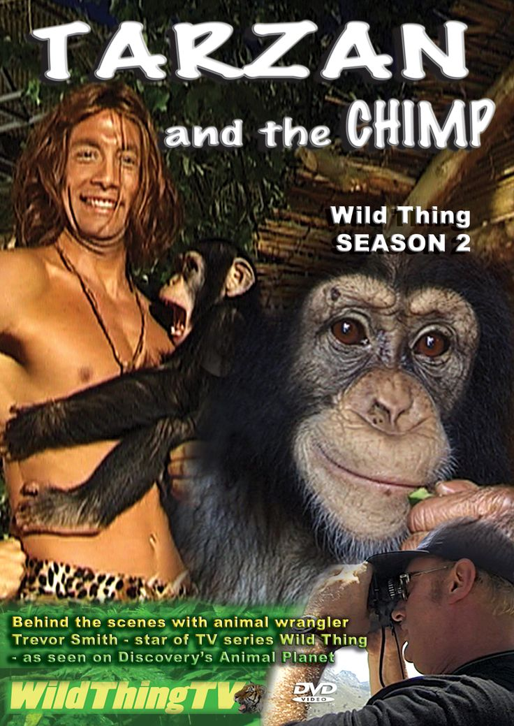 Tarzan & the Chimp - a brand new episode of the TV series Wild Thing produced by VSI TV    Available on DVD for £12.99 plus p/p   http://www.wildthingtv.net