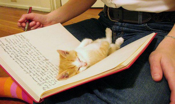 gatos-atrapalhando-leitura-2