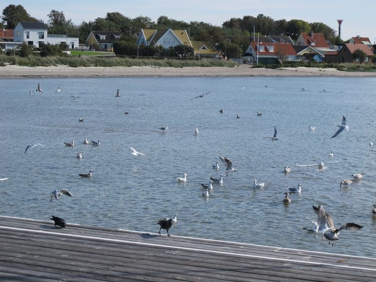 Höganäs city beach
