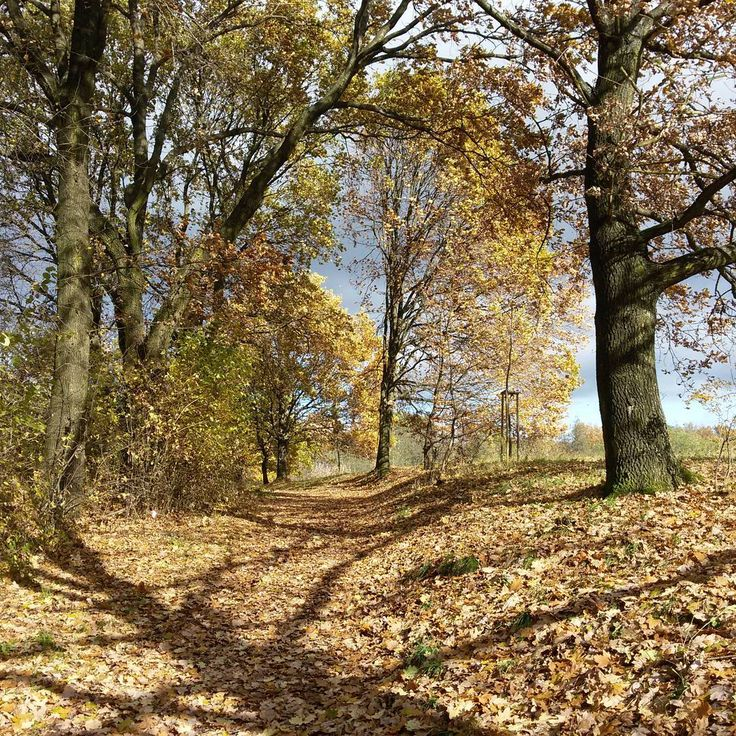 #autumn #autumnleaves #trees