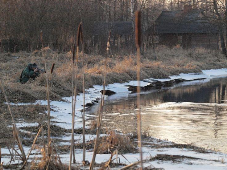 Narewka River in Białowieża