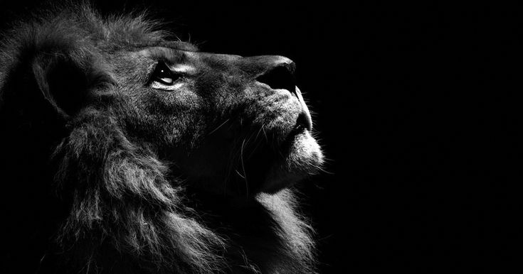 These B&W Animal Portraits Were All Shot In A Local Zoo | Bored Panda