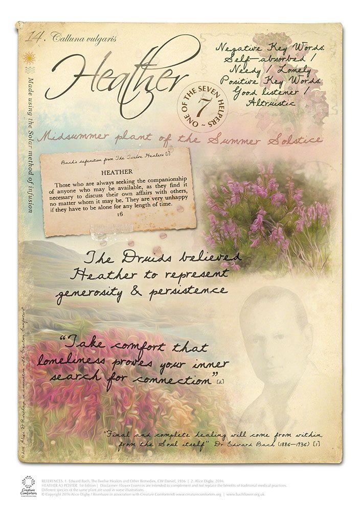 Image Result For Bach Flower Remedies Heather Fleurs De Bach Image Fleur Fleurs