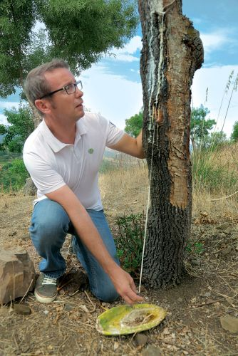 Xavier Ormancey Director of R&D for Yves Rocher visited Sicily to learn more about extracting Manna Ash!
