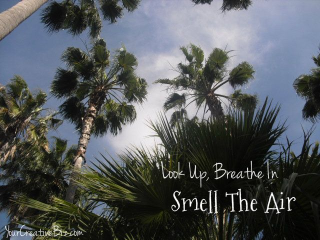 Look Up, Breathe In, Smell The Air