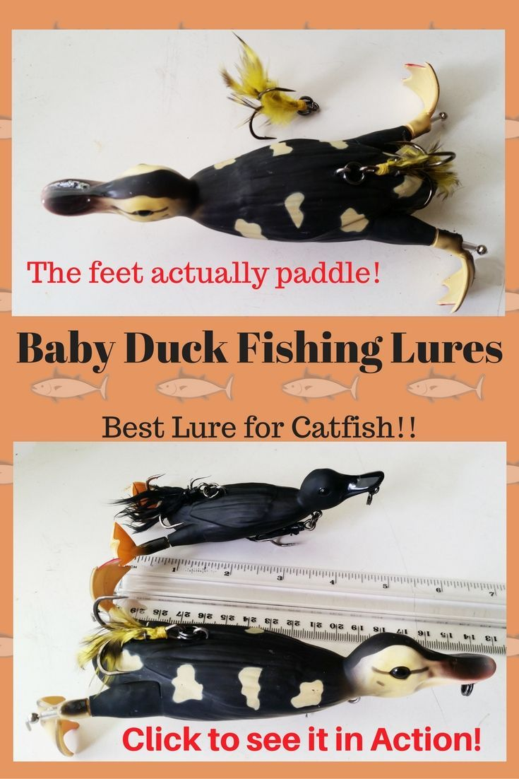 This could be the Best Lure for Catfish: Baby Duck Fishing Lures - Bait Cast - and - Fish Reels
