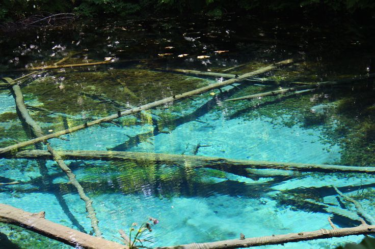 small pond of god in Hokkaido. It's  so mysterious pond.