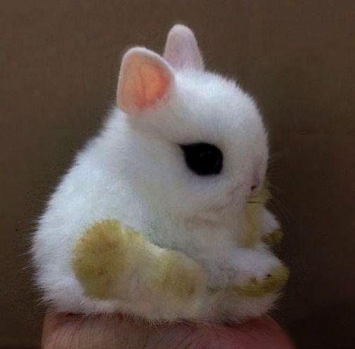 Get some > Kittens Near Me Craigslist ) Cute animals
