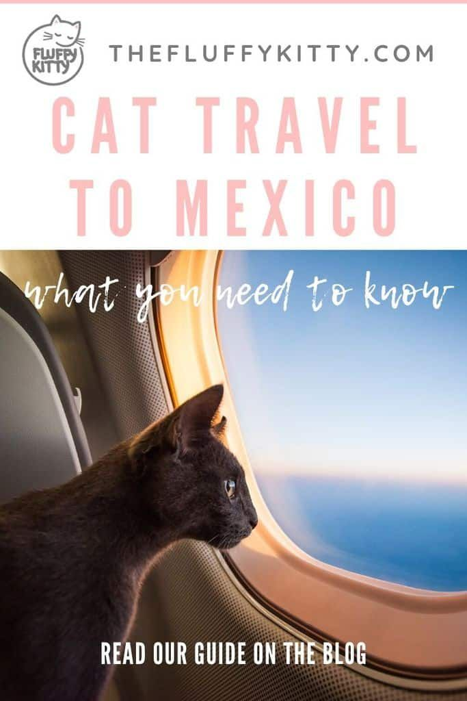 Flying To Mexico With A Cat Ultimate Guide In 2020 Cat Travel Pet Travel Flying With Pets